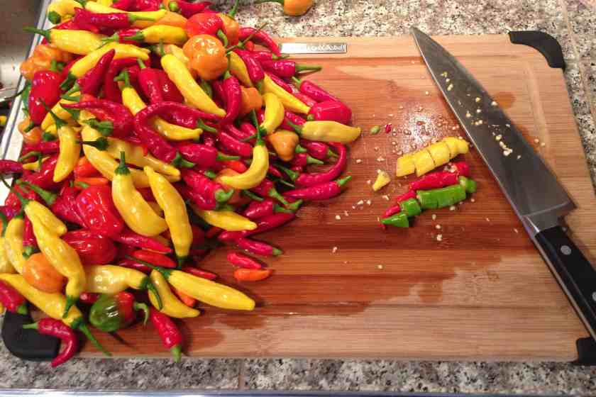 A mix of hot pepper varieties straight out of the garden.