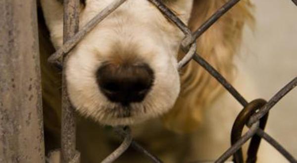 Homem é acusado de matar cachorros com choque elétrico em Guaramirim