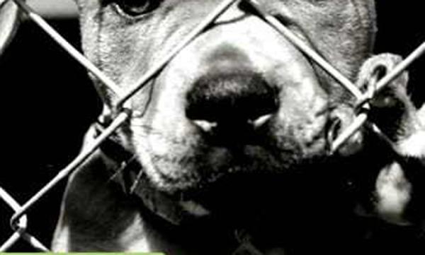 cachorro-grade-preso-triste-adote-petrede