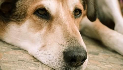 Medium Of Does The Dog Die