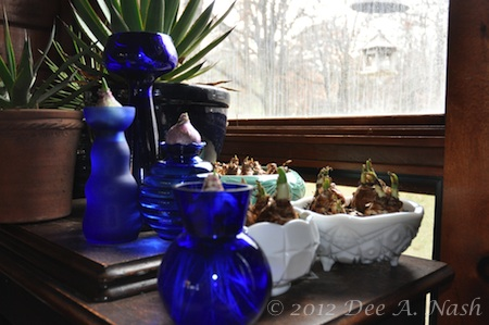 Cobalt blue forcing vases and milk glass bowls. You can also see the vintage green, probably McCoy, bowl with the crocus in back next to the agave.