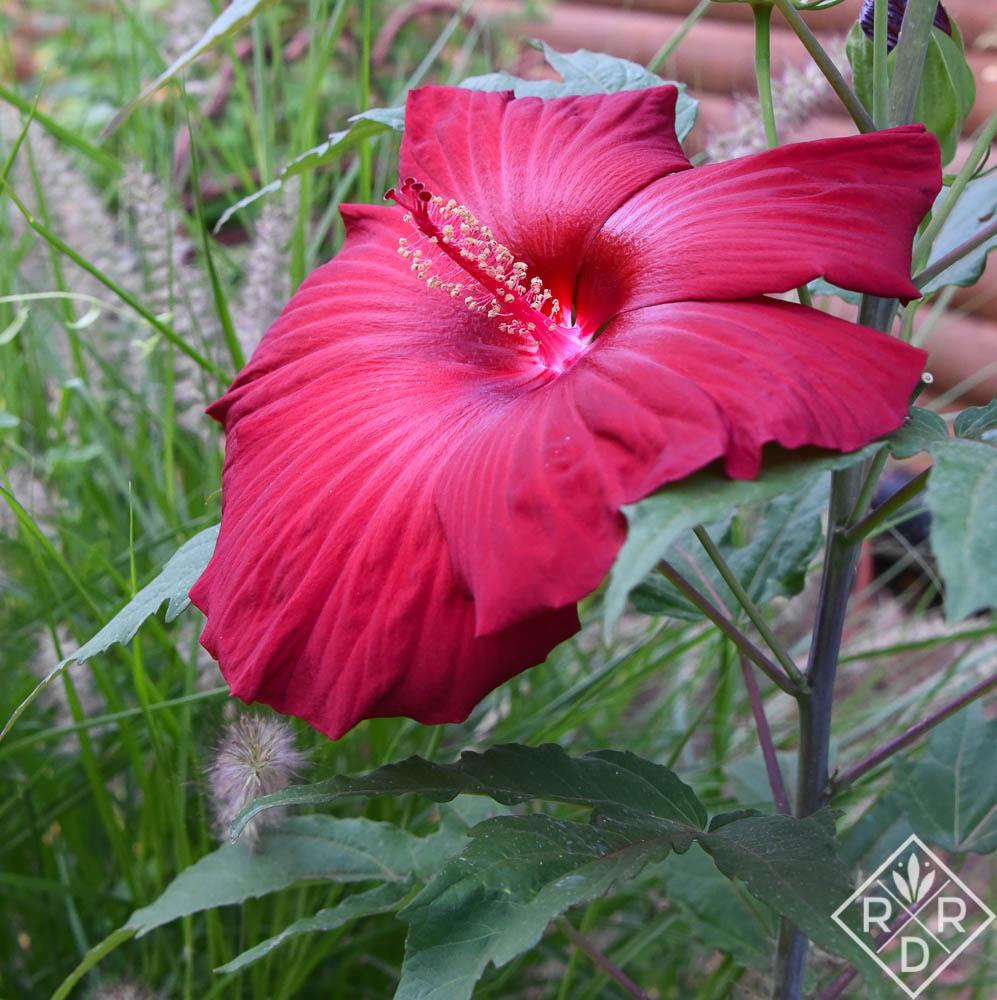 Garden Bloggers' Bloom Day: Hot June