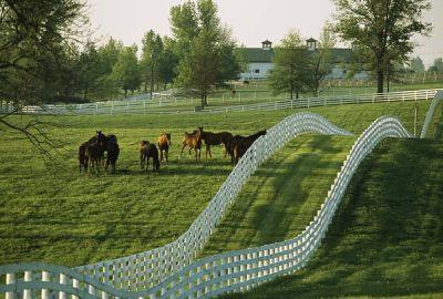 My Old Kentucky Home on Pinterest | Kentucky, Churchill Downs and Kentucky Derby
