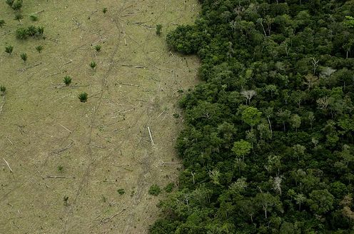 Haiti's Poverty is Directly Linked to Deforestation and Habitat Loss