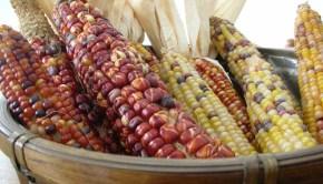 various-corn2
