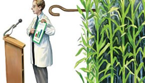 do-seed-companies-control-gm-crop-research_matt_collins