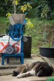Łuszczarki to jedyne maszyny używane przy produkcji ziaren kawy, dlatego trzeba ich bacznie pilnować :)