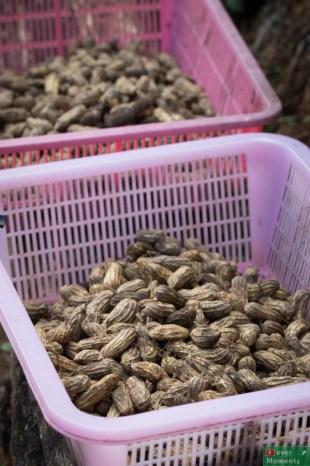 Okolica słynie nie tylko z upraw kawy, ale też...orzeszków makadamia.
