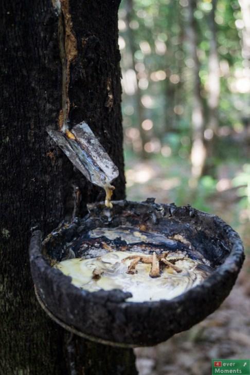 Przekraczamy granicę uprawy kauczuku i tropikalnej dżungli