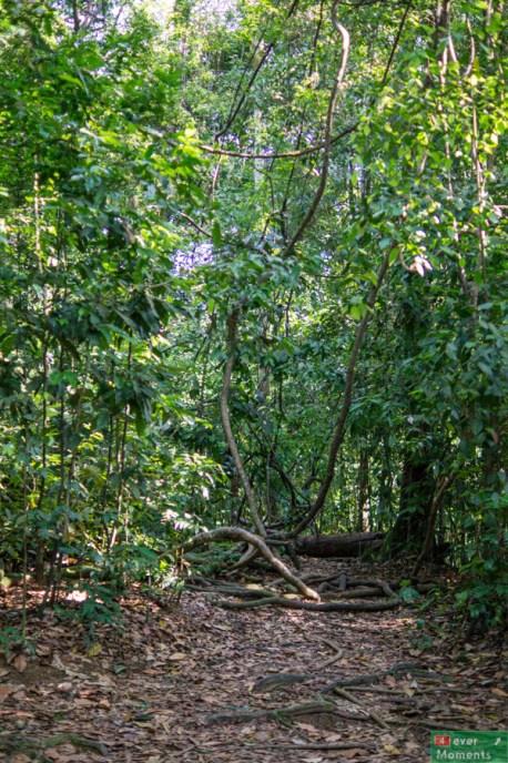 ...chociaż w rzeczywistości wygląda jak zwykły gęstszy las :)