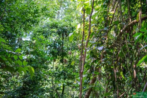 Dżunglę można pokazać tak...