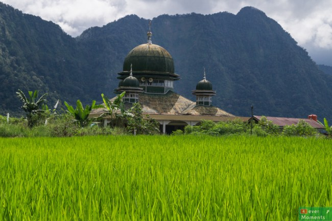 Jest i meczet pośród pól ryzowych