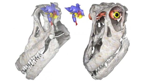 Sarmientosaurus-mussachioi, nuevo dinosaurio descubierto en Argentina.
