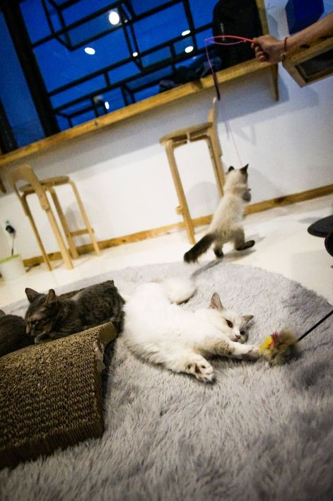 game-on_cat-cafe-seoul