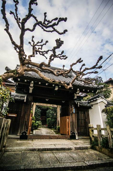 cool-tree-in-kyoto