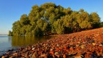 Mangroves at G.J. Walter Park - in the Moreton Bay Ramsar Site