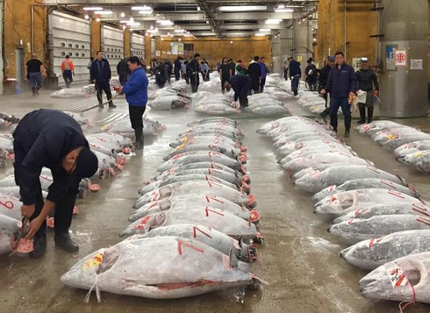 Tsukiji wonderland2