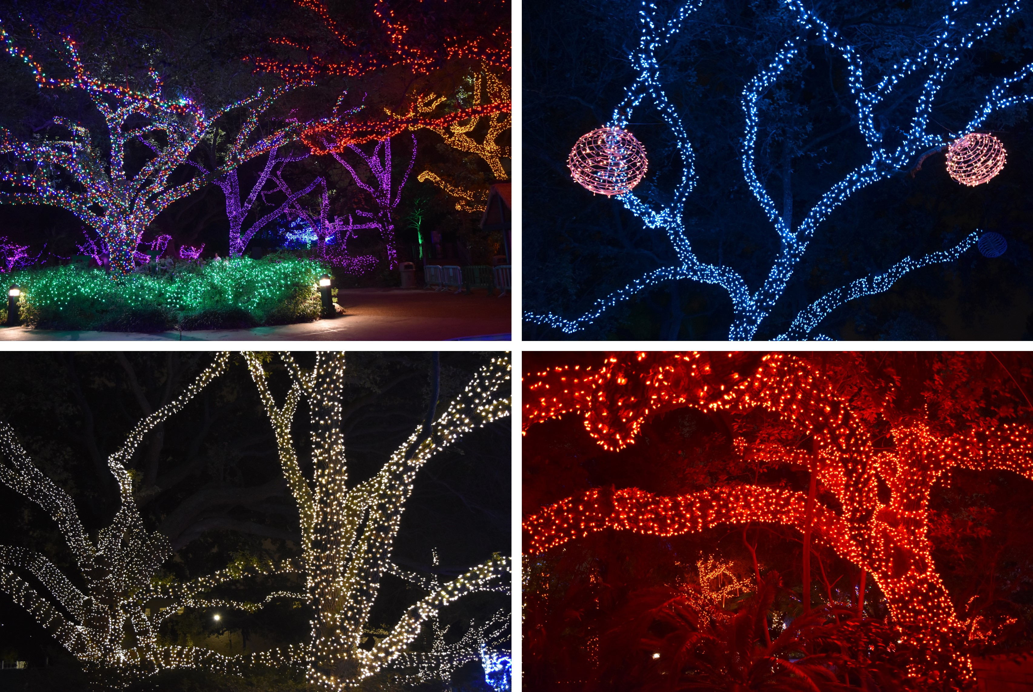 Channeling My Inner Child at Houston Zoo Lights Red Shoes Red Wine