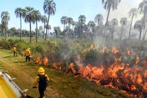 incendio palmar