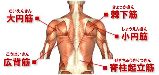出典:http://筋トレcamp.jp/musclechart.htm