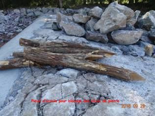 05 les pieux d'acacia