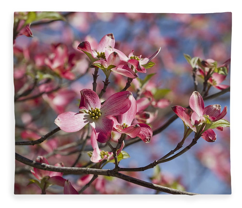 Cushty Cornus Florida Fleece Blanket Featuring Photograph Pink Flowering Dogwoodtree Cornus Florida By Kathy Pink Flowering Dogwood Tree Cornus Florida Fleece Blanket Sale houzz-03 Pink Dogwood Tree