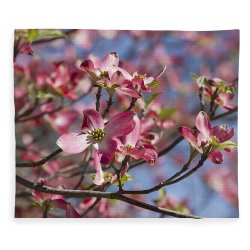 Small Crop Of Pink Dogwood Tree