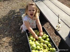 madison_apples_2015