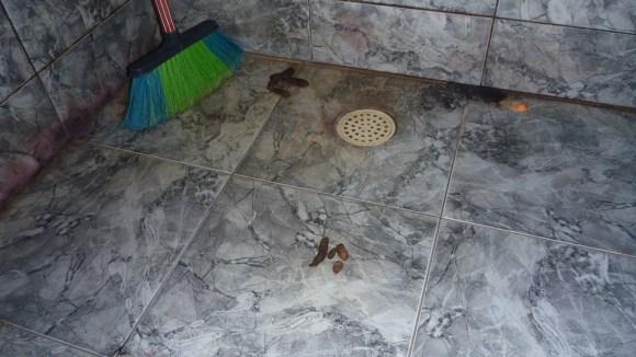 Fezes de gato em banheiro da oficina. Cheiro de esgoto era onipresente em toda a casa