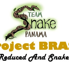 Courtesy of Dr. Julie Ray of Team Snake Panama