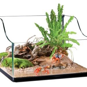 pt3746_turtle_terrarium_crab