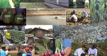 Distributor Pupuk Organik Natural Nusantara