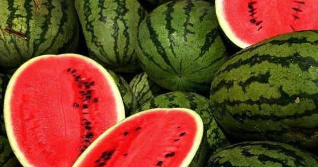 Tehnik budidaya semangka dengan hasil maksimal