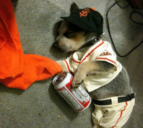 puppy-and-beer