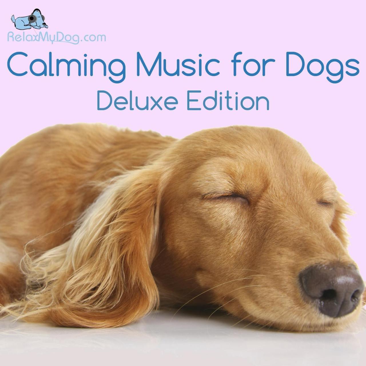 Fullsize Of Calming Music For Dogs