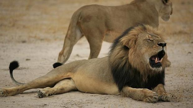 Cecil was much loved in Zimbabwe.