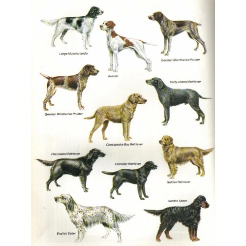 Medium Crop Of Ancient Dog Breeds