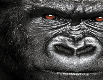 Gorilla_Cover