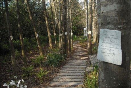 Leamos en el bosque - 2013. Intervención en Pilar, Tec mármoles sobre álamos.