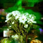 floridita santandera