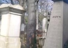 Shalom París