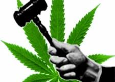 a-mariguana