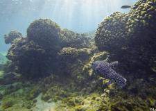 Bajo el mar, a unos metros de la costa.