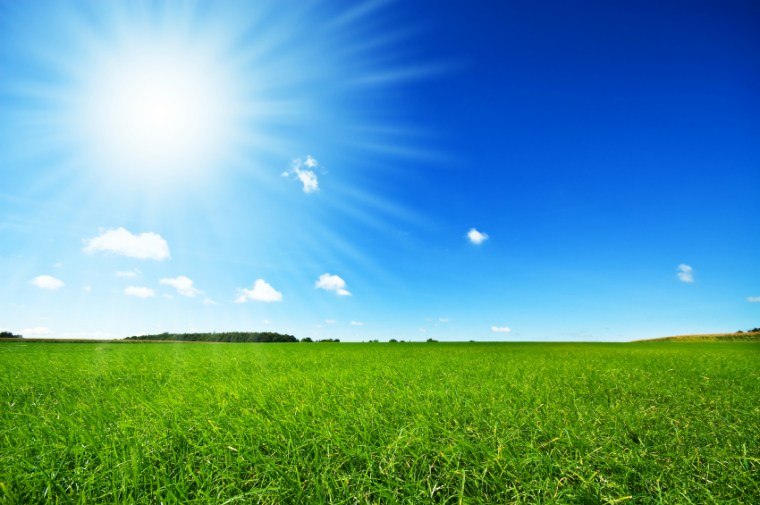 fresh green grass with bright blue sky