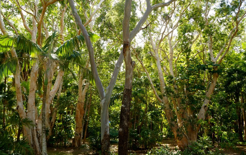 Tropical rainforest, Queensland