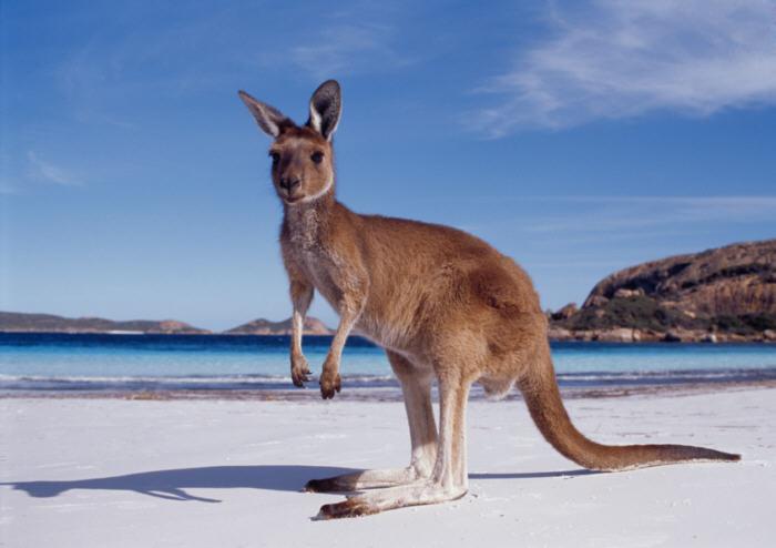 Future Rexy Edventures in Australia in Pictures