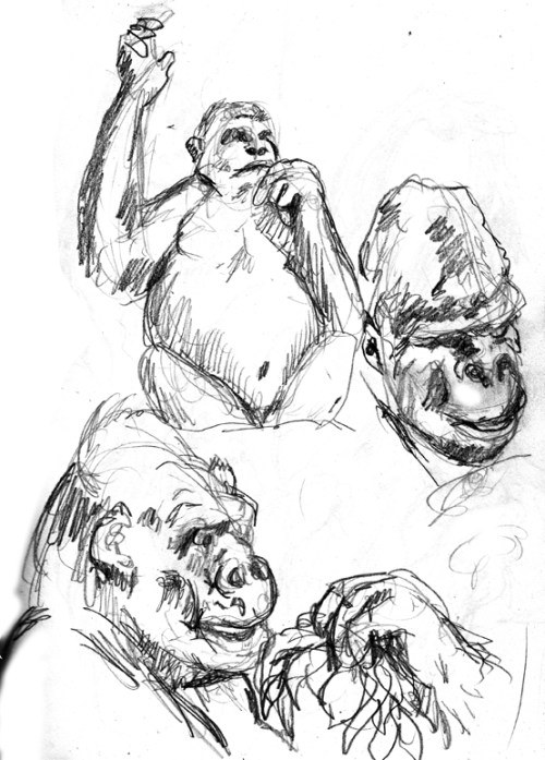 Sketches Gorillas