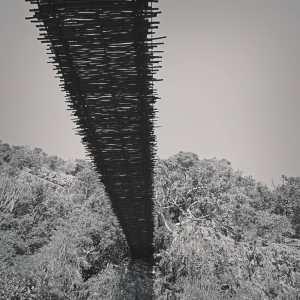 DSC00168-2-WEB Monkey Sanctuary - Underside of bridge