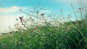 Field Wild Flowers web