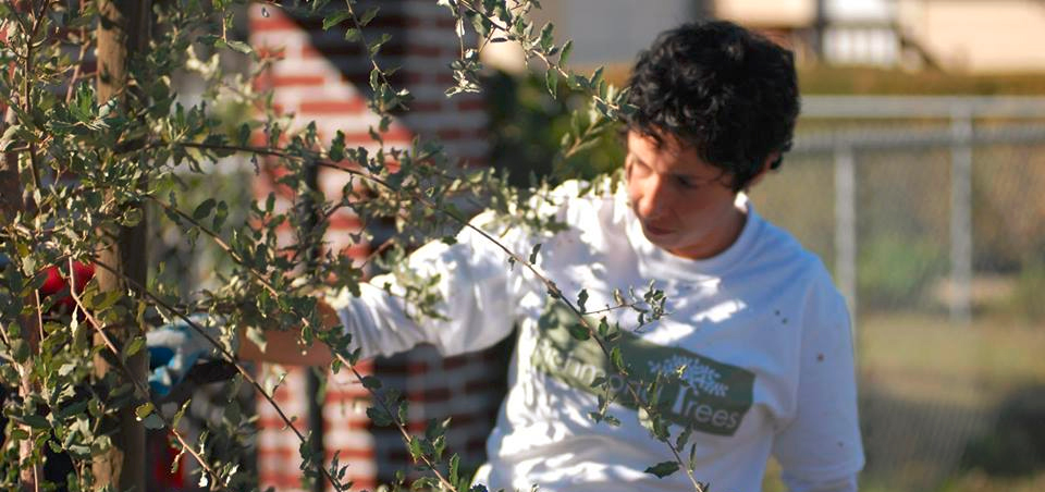 Volunteers sought to help plant 19 trees in Richmond this Sunday